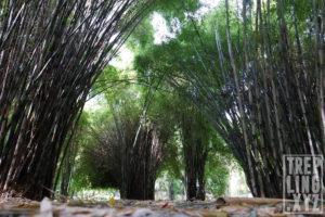 Penampakan Hutan Bambu