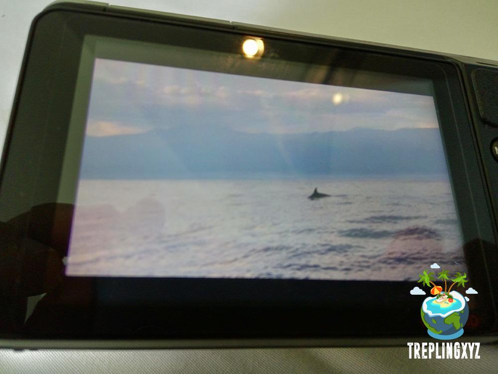 Penampakan dolphin