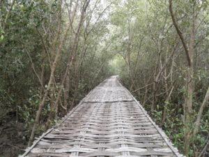 Jalan kayu melalui hutan mangrove