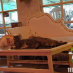 Review Caturday Cat Cafe Bangkok