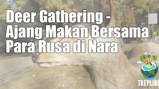 deer gathering nara