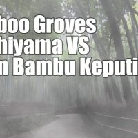 bamboo groves hutan bambu